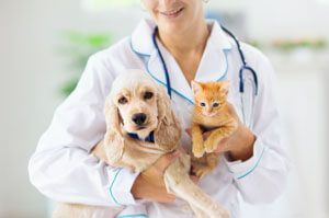 Veterinarian holding a puppy and a kitten